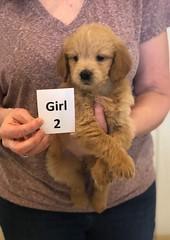 Cinderella Girl 2 1-11