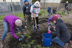 20200120__Vestal Learning Garden MLK Day of Service_25 (ppscomms) Tags: vestalschool mlk day service learning garden