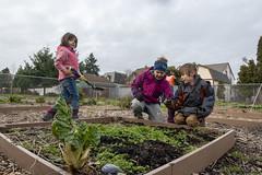 20200120__Vestal Learning Garden MLK Day of Service_18 (ppscomms) Tags: vestalschool mlk day service learning garden