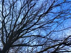 Iph8211 (gzammarchi) Tags: italia natura ravenna parco albero quercia ramo inalto