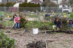 20200120__Vestal Learning Garden MLK Day of Service_7 (ppscomms) Tags: vestalschool mlk day service learning garden