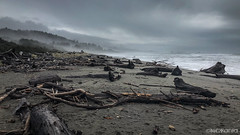 Strewn (Nick Kanta) Tags: beach clouds color driftwood ocean oregon oregoncoast outdoorphotography pacific sand sky surf trees water waves iphone8plus iphoneography