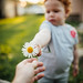 A hand giving out a daisy to a small child