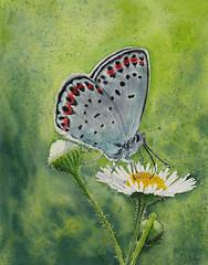 margherita (-valarian-) Tags: margherita fiori farfalla acquerello watercolour valarcolour