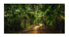 Tropical Pathway (Andy Gray Photography) Tags: travelphotography palms tropical flora landscape foliage dense green pathway thailand rainforest forest jungle