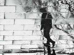¿Vienes sólo? (Elena m.d. 12.8 M views.) Tags: rain guadalajara street reflections shadows monocromo bw bn urban 2020 nikon d7500 signa sigma105 new