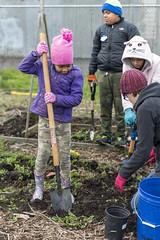 20200120__Vestal Learning Garden MLK Day of Service_14 (ppscomms) Tags: vestalschool mlk day service learning garden