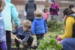 20200120__Vestal Learning Garden MLK Day of Service_12 (ppscomms) Tags: vestalschool mlk day service learning garden