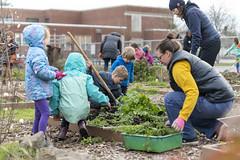 20200120__Vestal Learning Garden MLK Day of Service_11 (ppscomms) Tags: vestalschool mlk day service learning garden