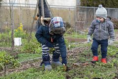 20200120__Vestal Learning Garden MLK Day of Service_5 (ppscomms) Tags: vestalschool mlk day service learning garden