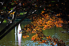 Sailing in Early Fall (Photographybyjw) Tags: sailing early fall autumn color this serene shot model sailboat cruising by peaceful mountain lake north carolina ©photographybyjw rural country leaves bright boat