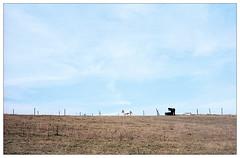 when summer fades away (fluffisch) Tags: fluffisch odenwald hessen frankenhausen leica leicam6 summiluxm35f14 preasph summilux 35mm f14 rangefinder messsucher analog film kodak portra160