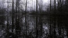 La Forêt sombre (Un jour en France) Tags: canoneos6dmarkii canonef1635mmf28liiusm forêt strange étrange reflet noiretblanc noiretblancfrance black monochrome
