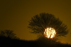 a sunrise (peet-astn) Tags: sunrise tree lavenham winter sub sole albero