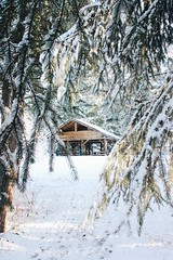 Winter in Prince George (melisssanguyen) Tags: foryou photograph snow outside forest photography travel 2019 britishcolumbia canada explore 2020 winter