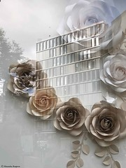 fleur-souvenirs© (alexandrarougeron) Tags: photo alexandra rougeron reflet paysage urbain ville