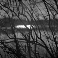 Hint of Light (LowerDarnley) Tags: hasselblad 500c 80mmplanar expiredfilm verichrome kodak mediumformat silverlake winter dark branches lake sun reflection breakheartreservation saugus wakefield ma