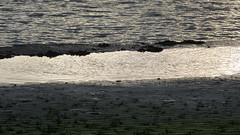 borderlines (achatphoenix) Tags: grenzbereich borderline ufer wasser water eau aqua abstrakt minimal