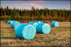 Januari 2020 (Jonas Thomén) Tags: höbalar haybales rundbalar roundbales field åker skog forest woods clouds moln grass gräs