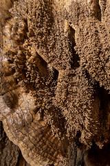 Jewelbox, Inhaling Bat Cave, Van Buren County, Tennessee (Chuck Sutherland) Tags: vanburencounty tennessee tn cave karst geology macro