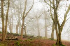 21st January 2020 (Rob Sutherland) Tags: lancaster leighton hall lancashire silverdale yealand trees mist fog wood woodland uk england english britain british