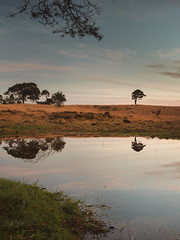 *** (Lee Ratters) Tags: sony a7 voigtlander cv40 40mm f12 somerset that lone tree water reflection symmetry calm tranquil relaxed colour sunset nature countryside