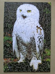 Owl (pefkosmad) Tags: jigsaw puzzle hobby leisure pastime wood plywood homemade amateur wooden herefordowlrescue missingpiece incomplete owl charity handcut