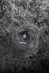 Nest #1 (cooper.gary) Tags: sit abstract robin canonphotography affinityphoto eos canoneos flickr avian zenphotography 50mm mindfulnessphotography hoyaintensifierfilter aerie nature canon canoneos5dmarkii birdhouse roost circular egg affinity nidus art bird nest weave blackandwhite outside canonef50mmf12lusm outdoors nether