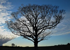 Tree and sky (Conundrum37) Tags: tree silhouette sky windmill front deal kent