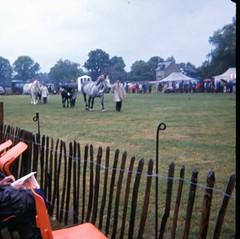 img407 (foundin_a_attic) Tags: 1980 horse cambridge midsummercommon