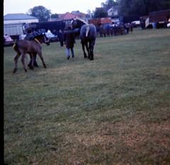 img405 (foundin_a_attic) Tags: 1980 horse cambridge midsummercommon