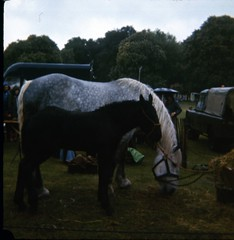 img400 (foundin_a_attic) Tags: 1980 horse