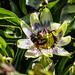 Bumble Bee 06