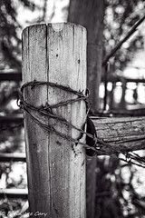Ranch Fence & Wire (lorinleecary) Tags: post cambriaandnear monochrome blackandwhite barbedwire fence