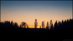 (Jonas Thomén) Tags: sunset solnedgång skog forest träd trees cloud moln dark mörkt kväll evening