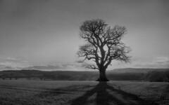 Winter sun. (Dave.Miles) Tags: nikkor nikonf 24mmnikkor redfilter ilfordfp4plus ilford ilfotecddx sunshine tree shadows staffordshire southstaffordshire landscape film filmphotography filmisnotdead 35mm 35mmfilm analogue