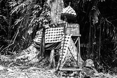 A holy tree. Bali, Indonesia. (Tiket2) Tags: asia asiatravel indonesia travel travelpic travelphoto indonesian amazing stunning tiket2 creativecommons free freephoto attribution tourism tourist exotic tropical holy tree holytree bali balinese hindu pray