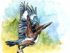 Kingfisher-Postcards for the Lunch Bag (Life Imitates Doodles) Tags: kingfisher bird watercolor postcardsforthelunchbag