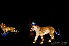 Lightopia at Chiswick House (alalchan) Tags: lightopia chiswickhouse chiswick london lights chineselanterns chinesenewyear yearoftherat