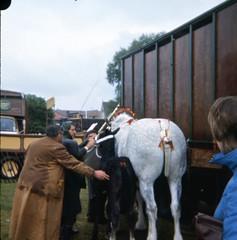 img416 (foundin_a_attic) Tags: 1980 horse cambridge midsummercommon
