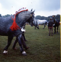 img409 (foundin_a_attic) Tags: 1980 horse