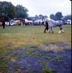 img406 (foundin_a_attic) Tags: 1980 horse cambridge midsummercommon