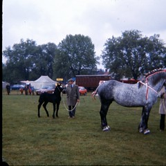 img404 (foundin_a_attic) Tags: 1980 horse