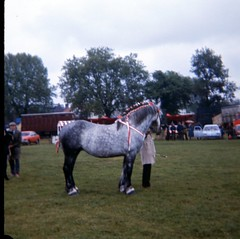 img403 (foundin_a_attic) Tags: 1980 horse