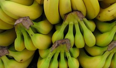 Inicia México exportación de plátano a China (diarionotimundo) Tags: china exportacióndeplátano méxico