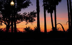 park lamp at sunset (Robert Borden) Tags: santamonica palisades palisadespark losangeles la socal california ca cali silhouette mostlyblack color orange purple black fuji fujifilmxt2 coast park nature plants