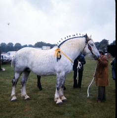 img413 (foundin_a_attic) Tags: 1980 horse