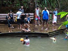 Family Fun in Forest Pool (mikecogh) Tags: colisuva forest pool natural family swimming fiji