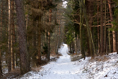 winding walkway through the forest (Slávka K) Tags: wood trees forest snow light sunnyday nopeople moretrees view country winter natur