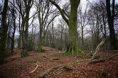 Talkin Tarn Woodland. 20/01/2020. (Mike Orrell Photography) Tags: forest a6000 sony winter walks nature trees woodland talkintarn tarn talkin